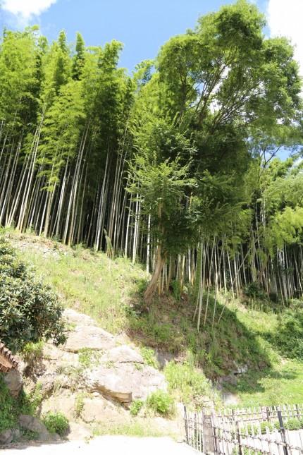 オペラハウスの裏の竹林
